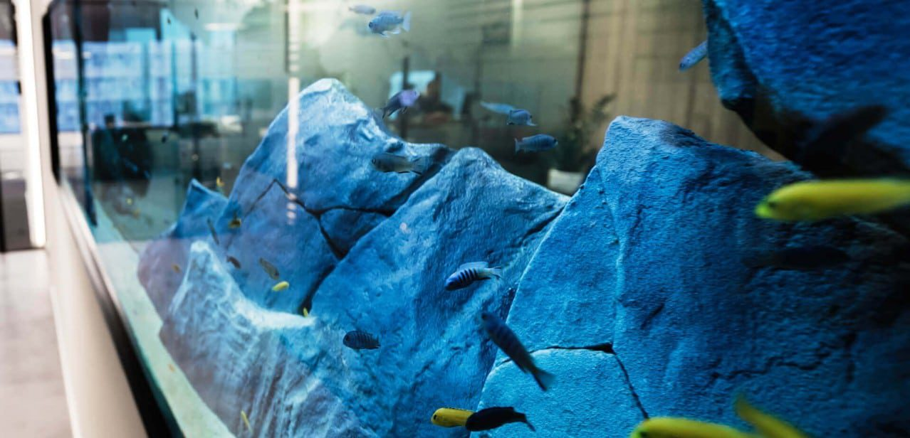Aquarium Design & Installation