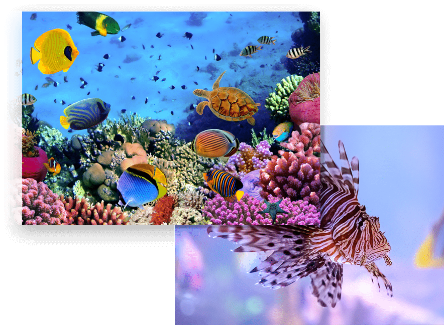 colorful saltwater fish tank image with lionfish image