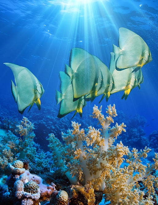 picture of school of saltwater fish