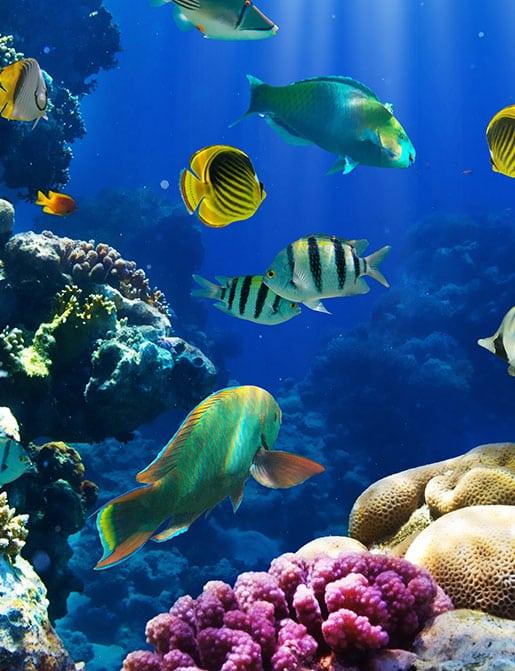 Saltwater fish tank image
