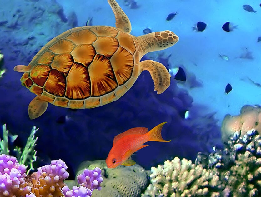 picture of saltwater fish with turtle