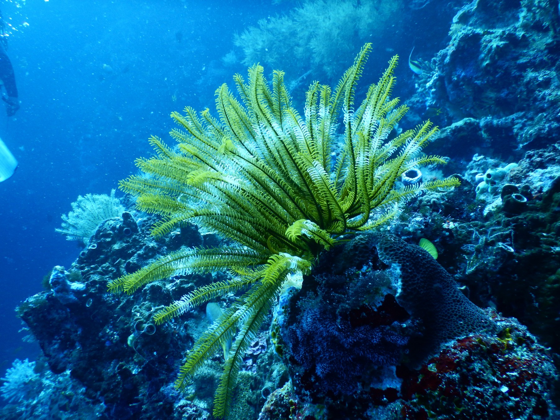 green Coral in salt water fish tank