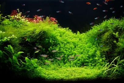 Freshwater custom aquarium