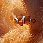 Ocellaris Clownfish Care & Info