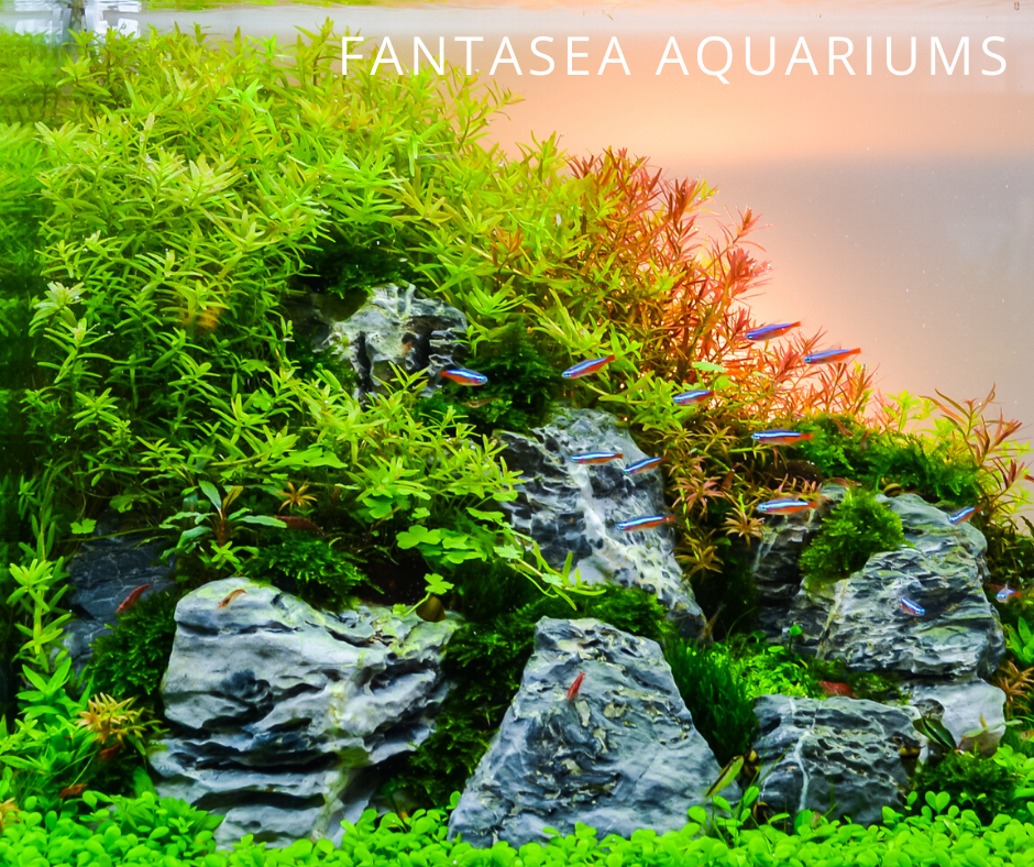 Aquarium with fishes and decorative plants