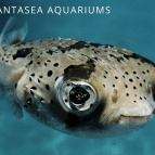 Pufferfish vs Blowfish | What's the Difference?