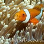 What does a clownfish eat?